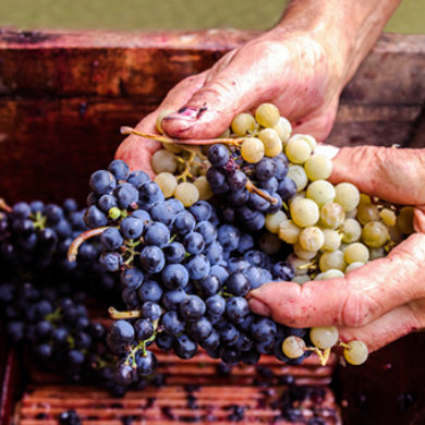 Lenguaje del Vino de la A a la Z